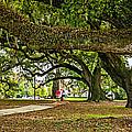 City Park Stroll by Steve Harrington