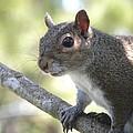 City Squirrel On The Hunt by Belinda Lee