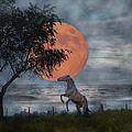 Claiming The Moon by Betsy Knapp
