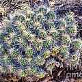 Claret Cup Cactus by Gary Richards