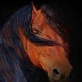 Classic Arabian by Stephanie Laird