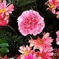 Carnations The Spanish Flower by Vladimir Berrio Lemm