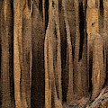 Clay Organ Pipes Formation In Front by Panoramic Images