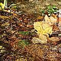 Clean Stream by Susan Herber