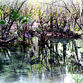 Clear Florida Springs by Carol Groenen