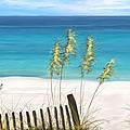 Clear Water Florida by Anthony Fishburne