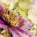 Clematis Closeup by Pam  Holdsworth