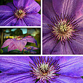 Clematis Collage by Lynn Hopwood