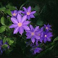 Clematis by Linda Seifried