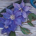 Clematis by Marlene Book