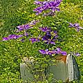 Clematis Vine On Mailbox by Constantine Gregory