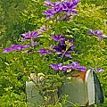 Clematis Vine On Mailbox Photo Art by Constantine Gregory