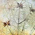 Clematis Virginiana Seed Head Textures by Ann Garrett