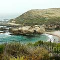 Cliffs Over Montana De Oro California by Artist and Photographer Laura Wrede