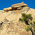 Climber At Quail Springs In Joshua Tree Np-ca by Ruth Hager