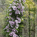 Climbing Clematis by Angie Vogel