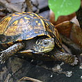 Climbing Turtle by Charlie Day