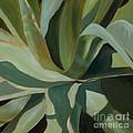 Close Cactus by Debbie Hart