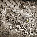 Close Crocodile  by Delphimages Photo Creations