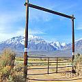 Close Gate by Marilyn Diaz