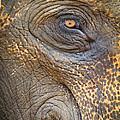 Close-up Elephant Eye by Inez Wijker