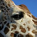 The Giraffe's Eye by D Hackett