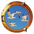 Close-up Of A Boat Closed Porthole With Flying Seagull On The White Background by Joel Vieira