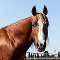 Close Up Of A Horse by Photostock-israel