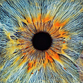 Close-up Of A Human Eye, Pupil And Iris by Dimitri Otis