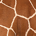 Close-up Of A Reticulated Giraffe by Panoramic Images