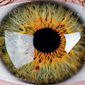Close-up Of Human Eye, Hazel by Panoramic Images