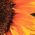 Close Up Of The Florets And Petals Of A Sunflower by Deborah Benbrook
