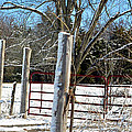 Closed Gate In Winter  by Lydia Holly