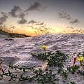 Closeup Flowers On The Beach by Michael Thomas
