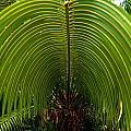 Closeup Of A Palm Tree Leaf by Alex Grichenko
