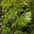 Closeup Of Moss And Lichen. Rhoen by Sebastian Kujas