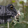 Clothed Toad by Paul Geilfuss