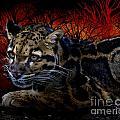 Clouded Leopard Two by Ken Frischkorn