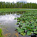 Clouds Among The Lily Pads In Swan Lake In Grand Teton National Park-wyoming  by Ruth Hager