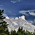Clouds Like Mountains Behind The Pines by Paulette B Wright