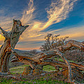 Clouds Over Broken Tree At Sunset by Marc Crumpler