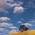 Clouds Over Lone Tree by Marc Crumpler