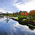 Cloudy Garden Reflections by Lynn Bauer