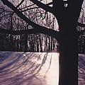 Clove Lakes Park In Winter by Glenn Scano