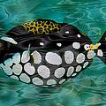 Clown Triggerfish by Jack Zulli