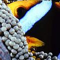 Clownfish 7 by Dawn Eshelman
