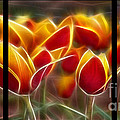 Cluisiana Tulips Triptych  by Peter Piatt