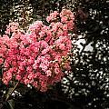 Clump Of Flowers by Jon Cody