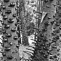 Cluster- Black And White by Douglas Barnard