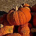 Knarly Pumpkin by Michael Gordon